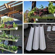 Hanging rain gutter salad garden that kids will love!