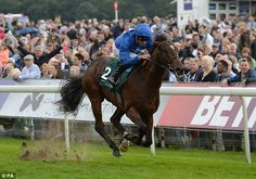 Blue Point (IRE) 2014 B.c. (Shamardal (USA)-Scarlett Rose (GB) by Royal Applause (GB) 1st Gimcrack S (GB-G2,6fT,York) (photo: PA)