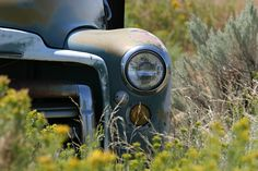 Vintage pick-up truck abandoned in a field.