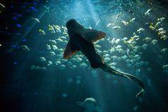 Hagenbecks Tierpark - Tropenaquarium Aquarium, Winter, Animals, Hamburg, World, Animales, Goldfish Bowl, Winter Time, Animaux
