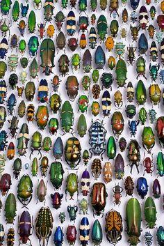 du tableau A colorful life Inspiring nature