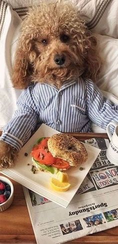 Do you ever feel like you love your dog too much? Do you ever feel like you love your dog too much? Animals And Pets, Funny Animals, Cute Animals, Funny Dogs, Poodle, Dog Day Afternoon, Pet Fashion, Cute Dogs And Puppies, Little Dogs