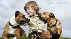 OBRÁZKY PRE POTEŠENIE Pitbulls, Dogs, Animals, Animales, Pit Bulls, Animaux, Pet Dogs, Pitbull, Doggies