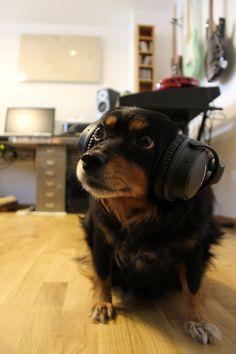 Welthundetag 2016 - Bürohund Lily