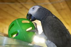 Foster Parrots, Ltd. is a 501(c)3 non-profit organization dedicated to the rescue and protection of unwanted and abused companion parrots and other displaced captive exotic animals.