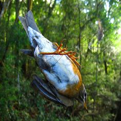 3 x 15 m) bird net china mesh15mm planta pomar frutas passaro morcego captured captured nevoa frete nylon net for Bird Control