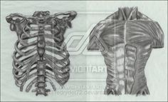 Anatomy in graphite by redryder72.deviantart.com on @deviantART