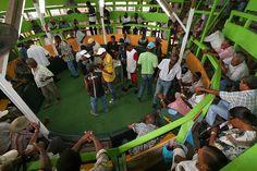 Les combats de coqs ne sont plus autorisés en métropole, mais sont tolérés aux Antilles françaises. Photo d'un Pitt dans le sud de la Martinique. http://makokot.fr/combats-de-coqs-en-martinique/