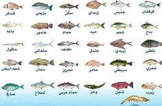 انواع الاسماك - بحث Google All Names, Types Of Fish, Agadir, Animals, Oasis, Food, Animales, Animaux, Essen