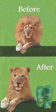 Super Silky Shampoo #Advertisement, #Lion, #Shampoo