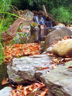 A beautiful Fall waterfall picture. All the seasons are beautiful when you have a Water Garden :)