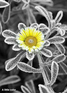 11k best black white yellow splash images on pinterest in 2018 splash of color paint brushes color boards black white yellow flowers black and white photography gold colour frost mightylinksfo