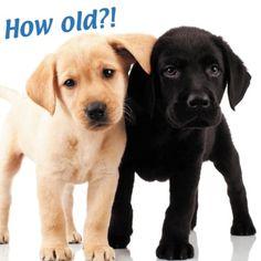 14 Best Black Labrador Greeting Cards Images In 2017