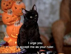 Salem the cat from Sabrina the teenage witch