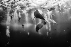 """""""Diving with a humpback whale and her newborn calf while they cruise around Roca Partida Island, in Revillagigedo, Mexico..."""" 