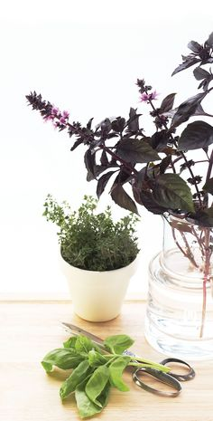 Grow your own herbs indoors, and help satisfy the craving for an early spring and provide culinary additions year round.
