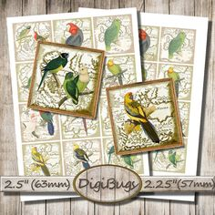 Parrot Images, Vintage Map, Digital Collage Sheet, 2.25 inch, 2.5 inch Squares, Printable Parrots, Decoupage Paper, Instant Download, a2 Parrot Image, Bird Illustration, Collage Sheet, Digital Collage, Vintage Images, Vintage World Maps, Gallery Wall, Birds, Squares