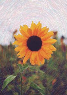 Flor de animação do girassol no turbilhão de luz solar SIFCO Flor do girassol no turbilhão de sol