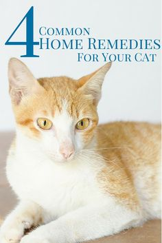 Did you know butter can help your cat cope with hairballs?  Check out these other natural home remedies for cats...