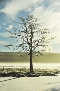 Tree of life Jonna Jinton Sweden
