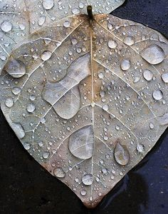 """""""Leaf in Rain,"""" a photo by alan_sailer. I live the purple clay tones of this image, the clarity and definition of the water droplets, and the detail on the leaves. Dew Drops, Rain Drops, Fashion Design Inspiration, Vitrine Design, I Love Rain, Foto Poster, Fotografia Macro, Water Droplets, Dancing In The Rain"""