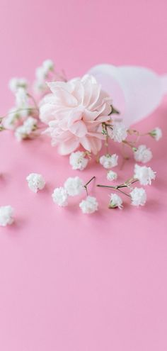 Pink Love, Pink Flowers, Stud Earrings, Jewelry, Wallpapers, Fashion, Pictures, Moda, Jewlery