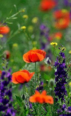 Wild flowers in Russia.