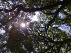 Árvore - Tree
