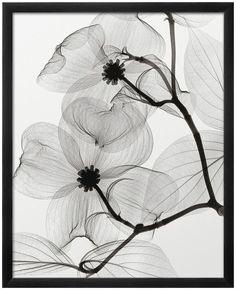 Freshen the look of any contemporary space with this Art.com Dogwood Blossoms Positive framed wall art. <ul> <li>X-ray photography design</li> <li>Artist: Steven N. Meyers PRODUCT DETAILS</li> <li>25''H x 20''W x 1''D</li> <li>Paper, acrylic, wood</li> <li>Vertical Display</li> <li>Attached hanging wire</li> <li>Wipe clean</li> <li>Model no. 14620475&l