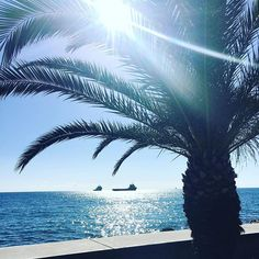 Nature is spoiling me today!-))) #cypruslife #cypruswinter #lattemacchiato #livinginparadise #begrateful #seieinheld #lebeseelischeidentität