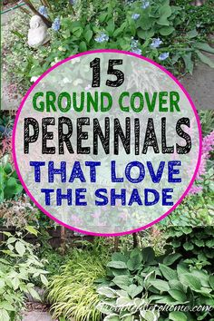Great list of perennial ground cover plants that love the shade! There are so many different options that are low maintenance and will help prevent weeds in my garden. #fromhousetohome #shadeplants #gardening #gardeningtips #shadegarden #gardenideas