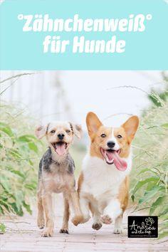 Für das strahlendste Hundelächeln - probier das Zähnchenweiß von Andrea and the Dog! Ohne chemische Aufheller oder schädliche Inhaltsstoffe! Reinigt, schützt und pflegt die Zähne deines Lieblings bei regelmäßiger Anwendung. Bei beginnendem Zahnstein kann mit Zähnchenweiß Abhilfe geschaffen werden. #hunde #hundeliebe #zahnpflege #andreaandthedog #naturpur #chemiefrei #kraftdernatur #bioqualität #dogs #petcare #ohnekonservierungsstoffe #handmadewithlove #steiermark #besterfreunddesmenschen Funny Dog Names, Funny Dogs, Cat Names, Dog Pictures, Animal Pictures, Dog Instagram Captions, Socializing Dogs, Puppy Socialization, Photo Chat