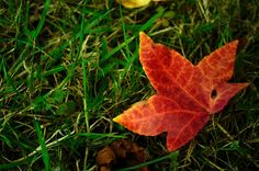 autumn is coming by RejangTown, via Flickr