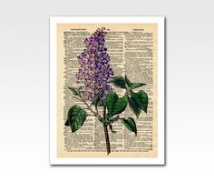 Vintage Lilac Flower on a Vintage Dictionary Page