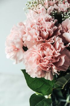 carnations - ohio's flower, my favorite flowers My Flower, Fresh Flowers, Beautiful Flowers, Pink Flowers, Birth Flower, Bouquet Flowers, Edible Flowers, Deco Floral, Arte Floral