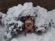 Pascha in the snow
