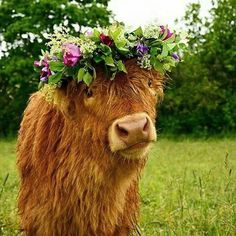 """ Just wanted to moo-by and let you know we are and of course to share a cute cow wearing a flower crown! Cute Baby Cow, Baby Cows, Cute Cows, Cute Babies, Highland Calf, Scottish Highland Cow, Mini Highland Cow, Fluffy Cows, Fluffy Animals"
