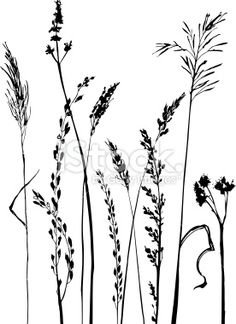 Silhouettes of flowers and grass Royalty Free Stock Vector Art Illustration