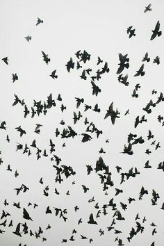 #alotofbirds