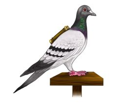 Did you know that messenger pigeons will travel across the world to deliver a message home, but they don't head home.. They head to their mate. The one that they love, they will travel faster and farther just to see the one. :)