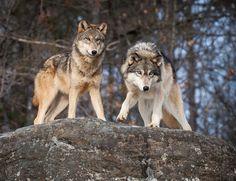 The pack watchers ByJacki Just-Pienta