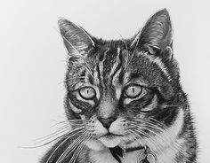 Unfortunately Milo passed away. I did my best make him look alive on the portrait. It was a pleasure to draw such amazing cat. Behance, Cool Things To Make, New Work, I Am Awesome, Cats, Drawings, Check, Portraits, Animals