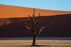 """Hunting for abstract shapes in Deadvlei in Namibia's Namib Naukluft National Park. Under normal circumstances hundreds of tourists trek across the Namib desert to come see Deadvlei daily. But with the impact of the global Covid-19 pandemic on travel, there were a mere handful. Deadvlei, which means """"dead marsh"""", is a white clay pan locked in by dunes like Big Daddy, the highest dune in the area the soars some 300 meters above it. Namib Desert, Big Daddy, White Clay, Come And See, Abstract Shapes, Dune, Trek, Landscape Photography, Jay"""