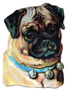 Victorian Scrap piece. This piece is a darling Pug dog! I think he looks so cute with his blue collar full of bells!
