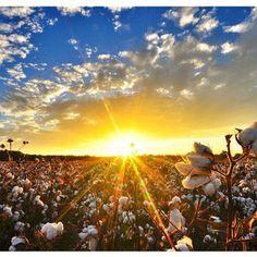 Sunset in the Delta, near Holly Bluff, Mississippi. (Amazing photo by John Montfort Jones, flatoutdelta.com) @John Montfort