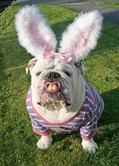 Easter dog. Just don't go messing with him!