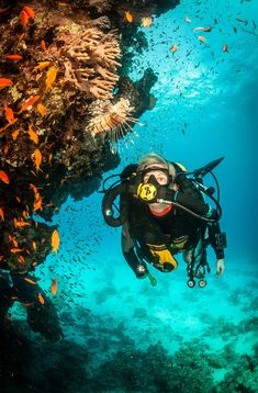 Rebreather diving in The Red Sea