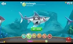 The shark that is born survivor, Porbeagle shark from hungry shark world.