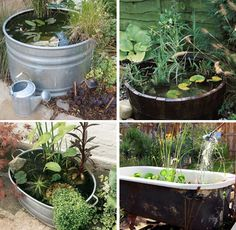 Before summer rolls around why not create a container pond? You know,  a pond in a large container! You can use a large flower pot, bucket, large tin bucket, you name it.