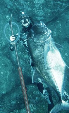 Sick shot. Who can ID this killer fish? Read...Set...Go! #reellife #spearfishing #letsgetrel #dive #freedive #underwater (Photo Credit: Unknown)